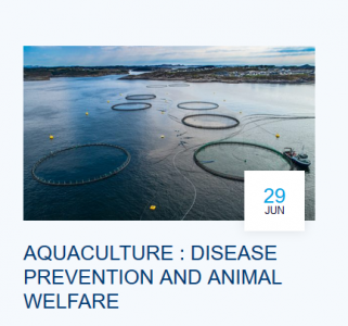 Aquaculture : disease prevention and animal welfare
