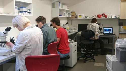 Collaboration avec l'Université de Bohème du sud