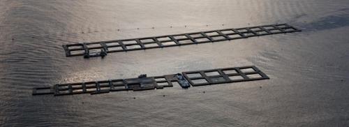 [Communiqué de presse] AQUAEXCEL3.0 : un projet pour le développement de l'aquaculture européenne