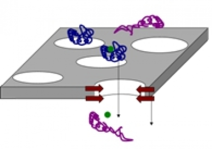 Multiscale analysis of protein