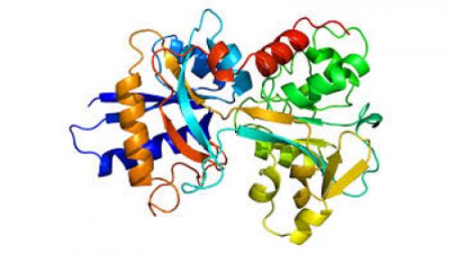 Ovotransferrin 3D structure