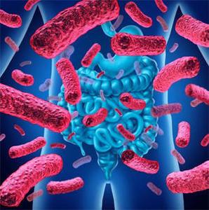 prolific_bacteriesintestinales
