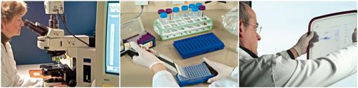 Equipe Biodiversité Bactérienne