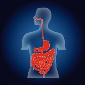 système digestif © Fotolia