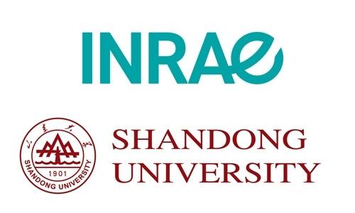 Partenariat OPAALE et  l'université du Shandong - Chine