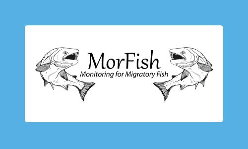 Morfish2015