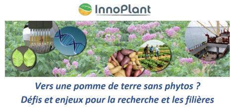 3e Carrefour Plants de pomme de terre