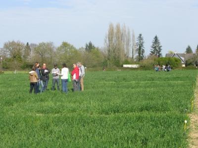Visite essais Associations céréales-légumineuses en AB
