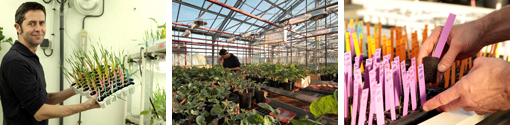 Greenhouses and experimental devices platform