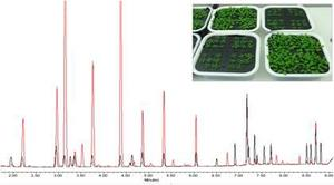 Aminoacid profile of Arabidopsis leaf tissues through UHPLC-DAD