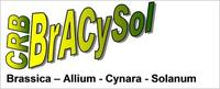 BrACySol Logo