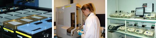 Some activities of the Genotyping Platform