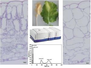 NMR relaxometry applied to oilseed rape leaf water status analysis and measurement of structural changes at the sub-cellular levels during senescence