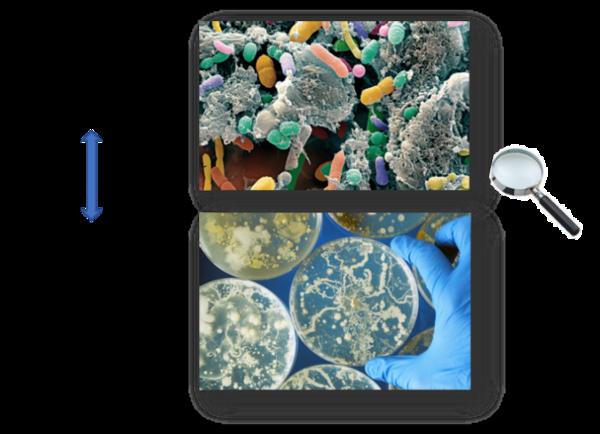 microbiote mise en culture