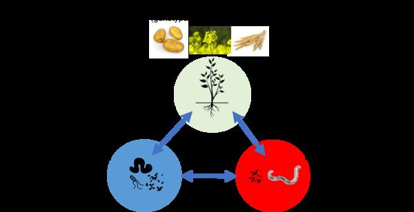 plantes genotypes panel populations