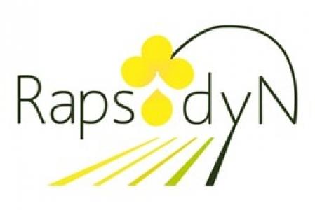 Logo Rapsodyn