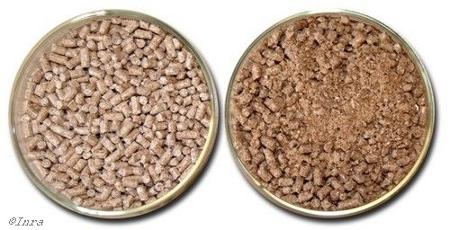 Feeding non-ruminants a high-fat high-fiber diet