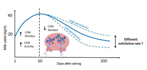 CEM exfoliation