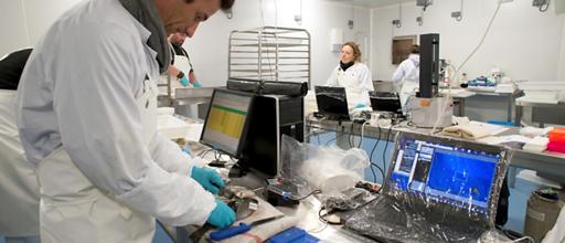 PEIMA Workshop - Flesh Quality Measurement