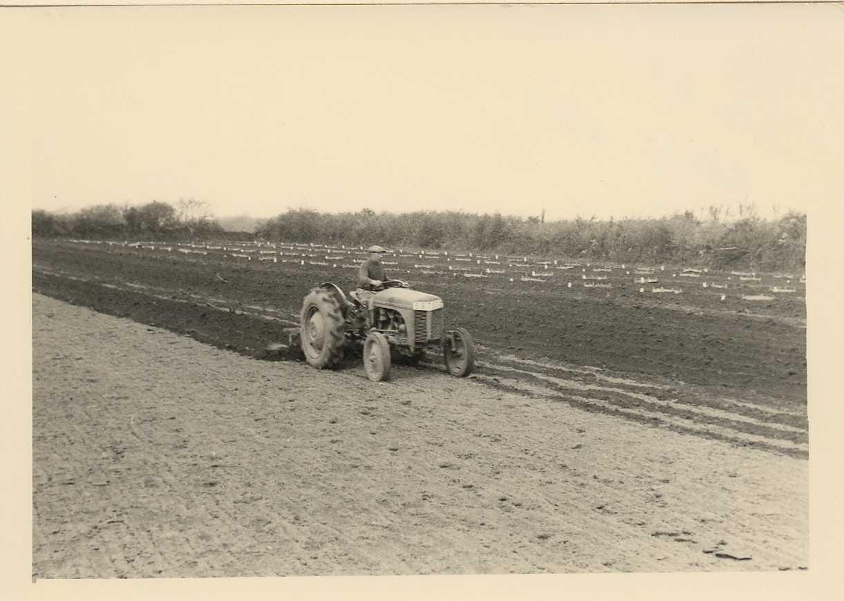 Plantations anciennes22_1