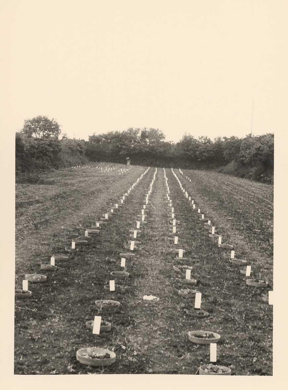 plantations anciennes50_1