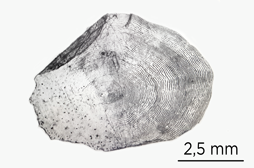 Scale close-up