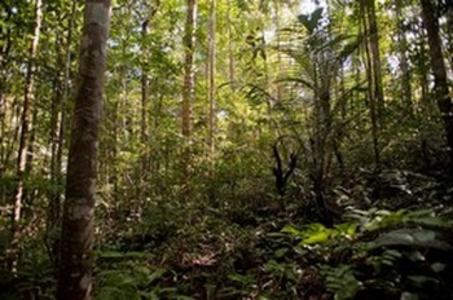 Foret guyanaise