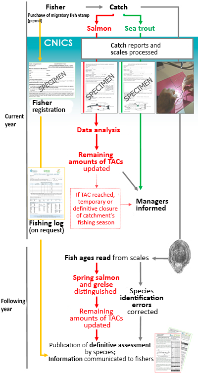 Catch report process