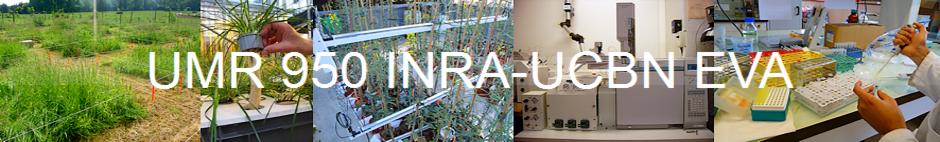 Bienvenue sur le site de l'UMREVA 950